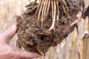 Cover photo for Digging Deeper Into Soils