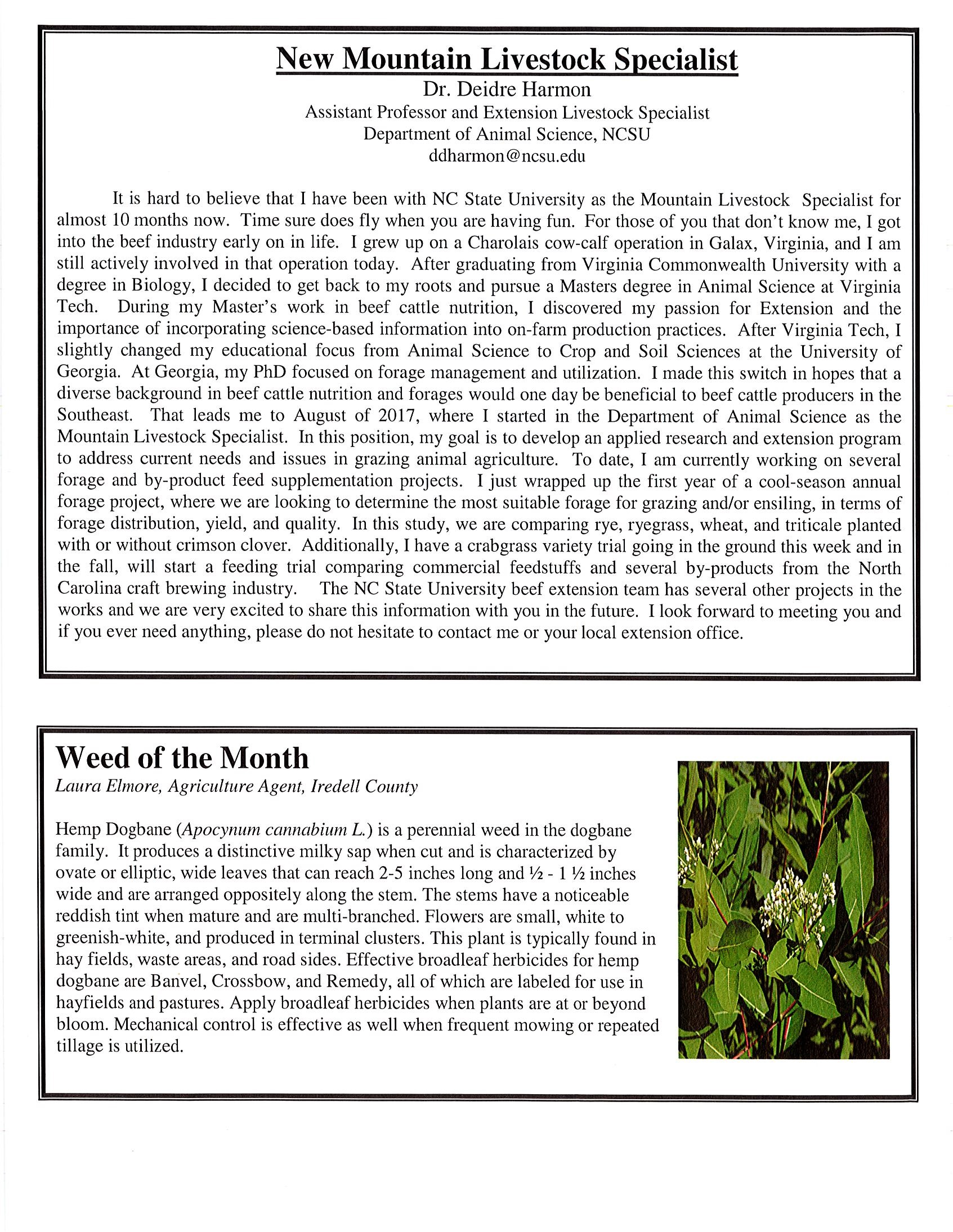 Image of Cattle Call Newsletter page 2