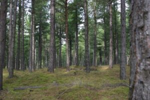 Cover photo for Timber Sales:  Is It Time to Sale?