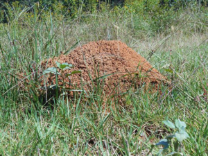 Cover photo for Fire Ants Are Here