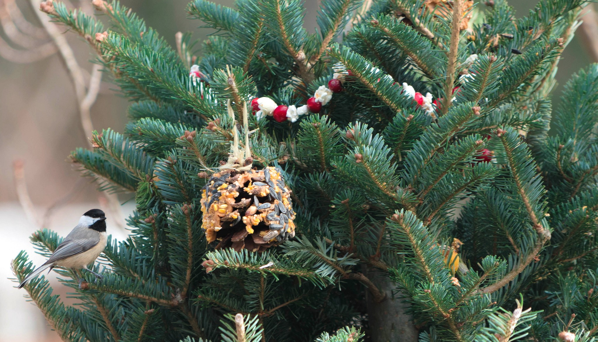 Pine cone with peanut butter and birdseed ornament and popcorn/ cranberry garland