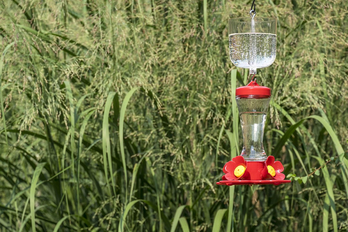 image of hummingbird feeders