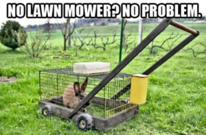 Funny image for rabbit mower