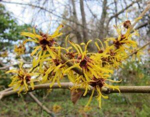 image of plants flowering in November