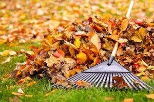 picture of rake laying over a pile of fall leaves